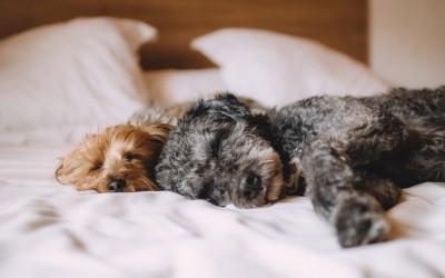 Wie sieht gesunder Schlaf aus?